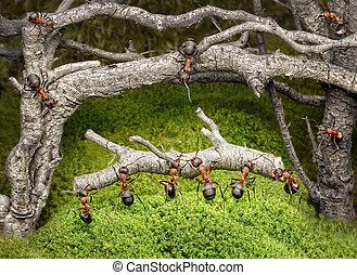 日誌, 生鏽, 螞蟻, 運載, 森林, 隊