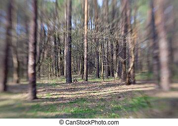 春天, 森林, 美麗