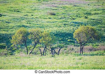 春天, 樹, 綠色, steppe, 小, 草, 看法