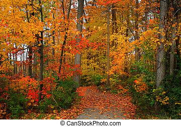 景色優美的秋季