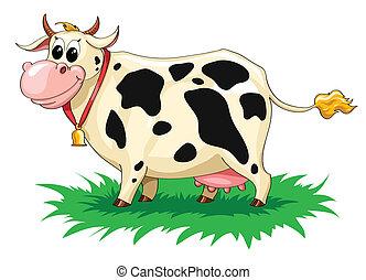 有斑點, 有趣, 母牛