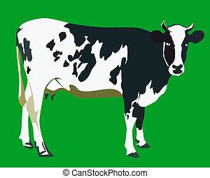 有斑點, 母牛