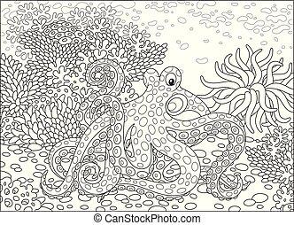 有斑點, 章魚