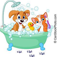 有, 貓, 狗, 洗澡