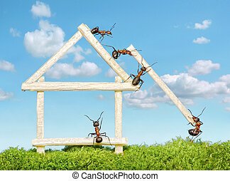 木制房子, 修建, 螞蟻, 隊