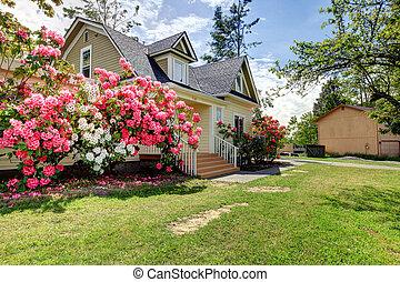 杜鵑花, 房子, 春天, 黃色, 外部, 開花