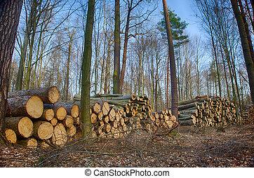 林業, 林務員, 森林, 樹
