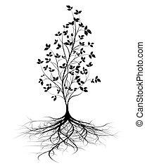 根, 矢量, 樹, 年輕, 背景