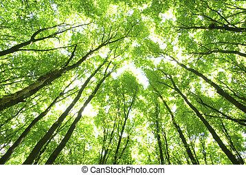 格林樹, 背景