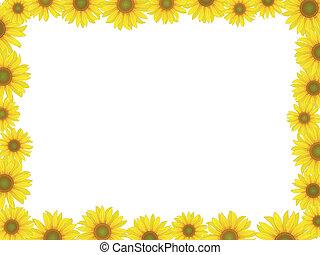 框架, 向日葵