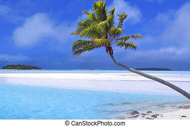 棕櫚, 天堂