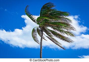 棕櫚, 強有力, 樹, 風