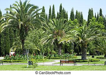 棕櫚, 熱帶, 樹, 花園, 美麗