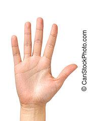 棕櫚, 被隔离, 女性的手