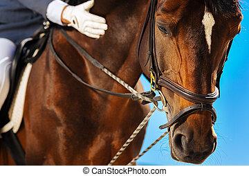 棕色的馬, 年度, horserace, 得到, dark-eyed, 比賽, 准備好