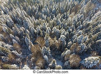 森林, 看法, 空中, 冬天性質