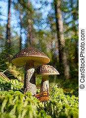 森林, 蘑菇