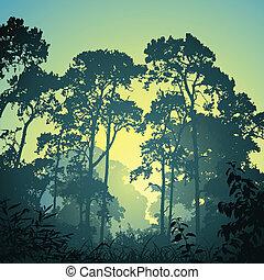 森林, 風景