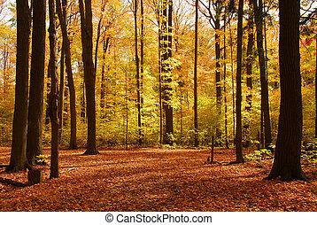 森林, 風景, 秋天
