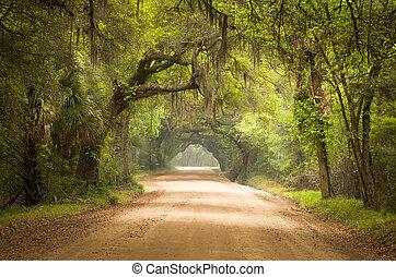 植物學, 苔蘚, 泥土, 島, 橡木, 路, 樹, 海灣, 種植園, 活, 深, edisto, 西班牙語, sc, 查爾斯頓, 南方, 森林