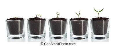 植物, 演化