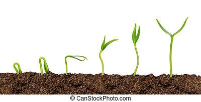 植物, 生長, soil-plant, 被隔离, 進展