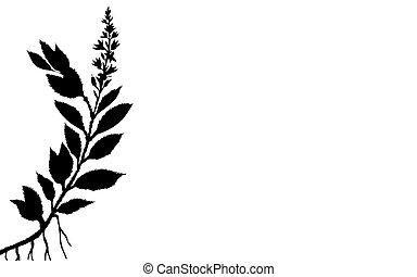 植物, 矢量, 背景, 插圖, 白色