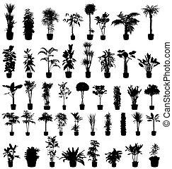 植物, 黑色半面畫像, 彙整