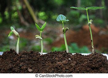 植物, growth-stages, 植物, 生長