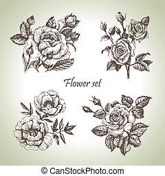 植物, set., 手, 玫瑰, 說明, 畫