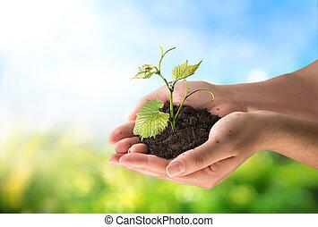 概念, 農業, 很少, 植物
