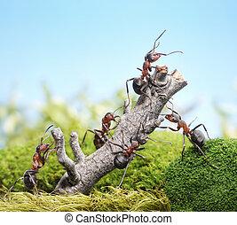 概念, 風化, 螞蟻, 樹, 配合, 隊