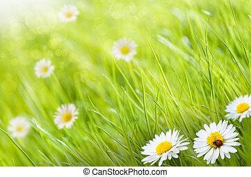模仿, 雛菊, ladybird, 空間, 這, 陽光普照, 圖像, 草, -, 一, 背景, 左, 花, 天, 模糊, 邊