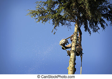 樹木栽培家, 切, 樹
