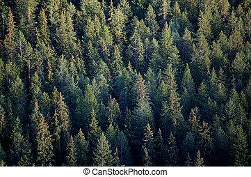 樹, 最好, 森林