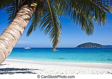 樹, 熱帶, 沙子, 棕櫚, 白色的海灘