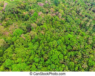 樹, 看法, 空中, 綠色的森林