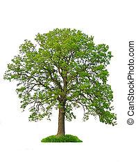 樹, 被隔离