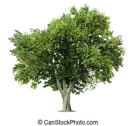 樹, 被隔离, 蘋果