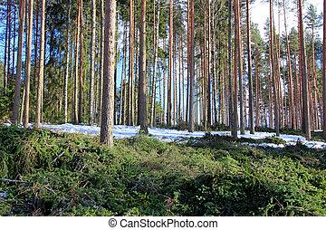 樹, 變薄, 間距, 森林