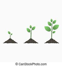 樹, growth.