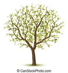 樹, leafage, 綠色