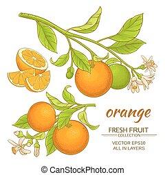 橙, 矢量, 集合