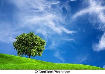 橡樹, 自然
