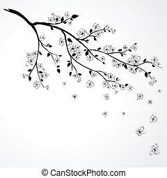 櫻桃, 開花, 日語, 分支
