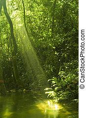 水反映, 森林, 綠色