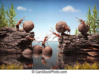 水壩, 工作, 修建, 螞蟻, 隊