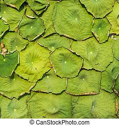 水模式, 百合花, 葉子, 背景