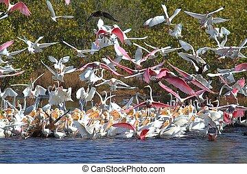 水, 大, 群, 喂鳥
