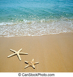 沙子海灘, starfish